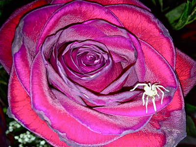 Photograph - Rose With Spider by Yelena Tylkina