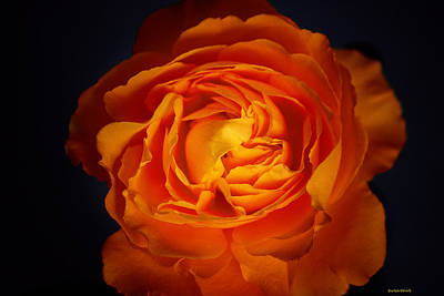 Photograph - Rose With Summer Haze by Roberta Byram