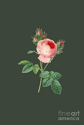 Rosaceae Painting - Rose1 by The one eyed Raven