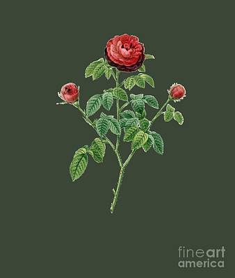 Bonny Painting - Rose134 by The one eyed Raven