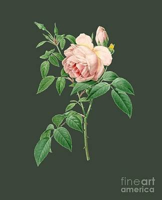 Bonny Painting - Rose14 by The one eyed Raven