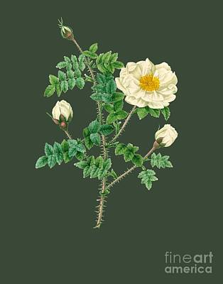Bonny Painting - Rose142 by The one eyed Raven