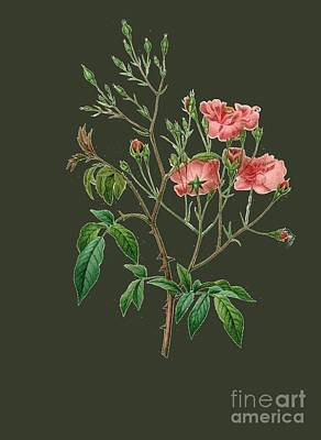Bonny Painting - Rose150 by The one eyed Raven