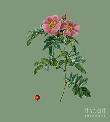 Rosaceae Painting - Rose16 by The one eyed Raven