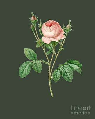 Bonny Painting - Rose17 by The one eyed Raven
