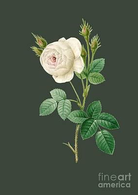 Bonny Painting - Rose26 by The one eyed Raven