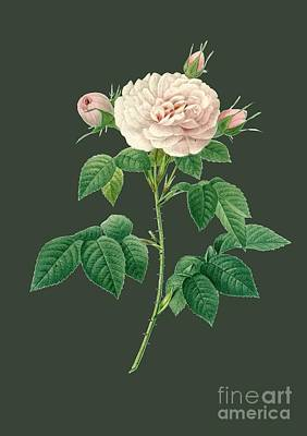 Bonny Painting - Rose31 by The one eyed Raven