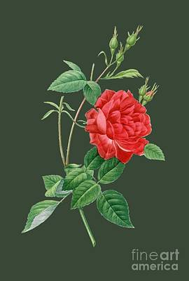 Bonny Painting - Rose33 by The one eyed Raven