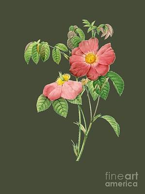 Rosaceae Painting - Rose63 by The one eyed Raven