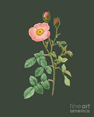 Bonny Painting - Rose8 by The one eyed Raven