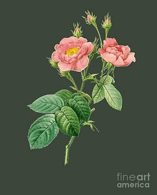 Bonny Painting - Rose83 by The one eyed Raven