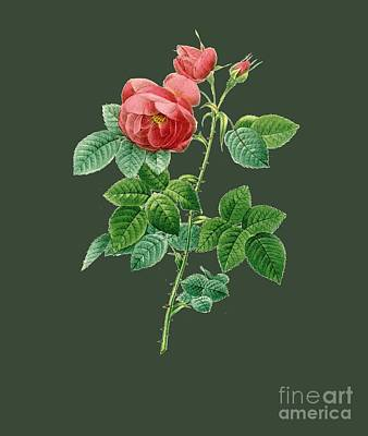 Bonny Painting - Rose98 by The one eyed Raven