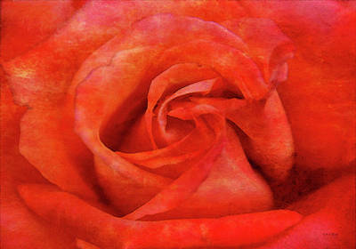 Photograph - Roseate 4687 Idp_2 by Steven Ward