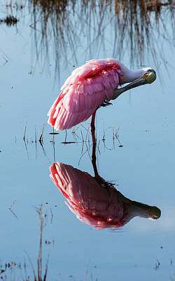 Photograph - Roseate Spoonbill by Arthur Dodd