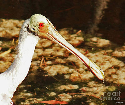 Photograph - Roseate Spoonbill Close-up by Terri Mills