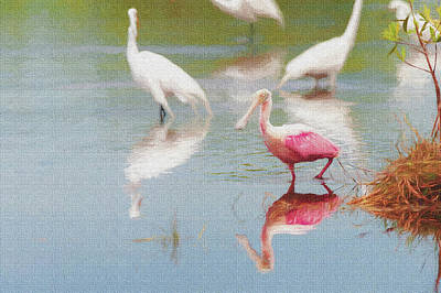 Photograph - Roseate Spoonbill Eating In A Lagoon With Other Egrets by Dan Friend