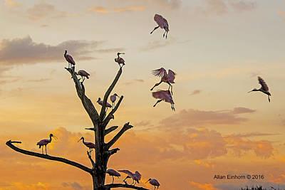 Roseate Spoonbill Gathering Original by Allan Einhorn