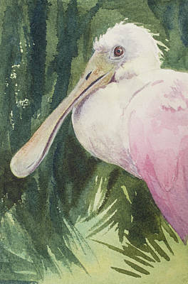 Rare Bird Painting - Roseate Spoonbill by Kris Parins