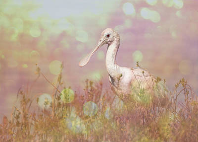 Photograph - Roseate Spoonbill Pink Sun Flare by Patti Deters