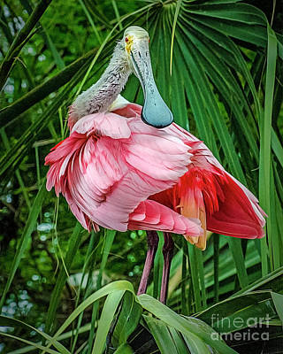 Photograph - Roseate Spoonbill Preening by Brian Tarr