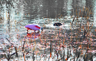 Keys Photograph - Roseate Spoonbill Select Color 2 by Ken Figurski