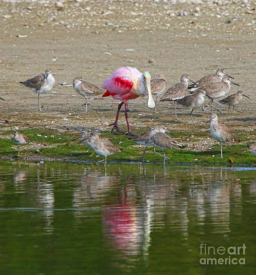 Garden Fruits - Roseate Spoonbill Standing Out in a Crowd  0959 by Jack Schultz