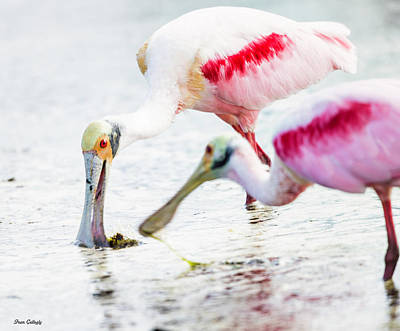 Photograph - Roseate Spoonbills by Fran Gallogly