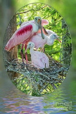 Bird Rookery Swamp Photograph - Roseate Spoonbills In Evangeline Parish Louisiana by Bonnie Barry