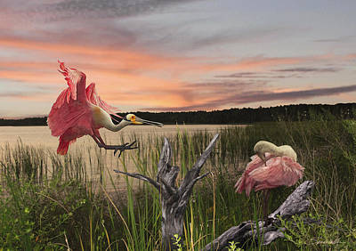 Spoonbill Digital Art - Roseate Spoonbills Of Florida by Spadecaller