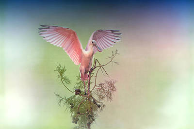 Spoonbill Photograph - Roseate With Wings Outspread by Bonnie Barry
