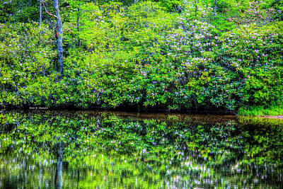 Photograph - Rosebay Reflections by Dale R Carlson
