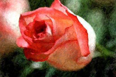 Photograph - Rosebud by Donna G Smith
