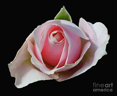 Photograph - Rosebud In Pink by Cindy Manero
