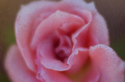 Photograph - Rosebud In The Rain by Teresa Wilson