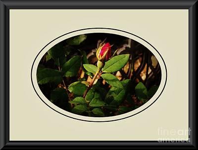 Wrap Digital Art - Rosebud by Marsha Heiken