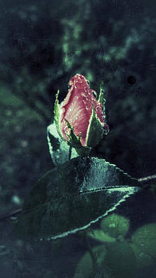Photograph - Rosebud Rain Drops by E Karl Braun