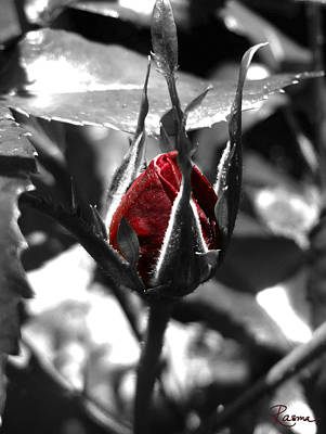 Amy Hamilton Animal Collage - Rosebud Red by Rasma Bertz