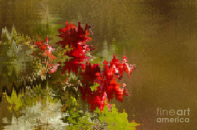 Photograph - Rosehip Abstract by Sharon Talson
