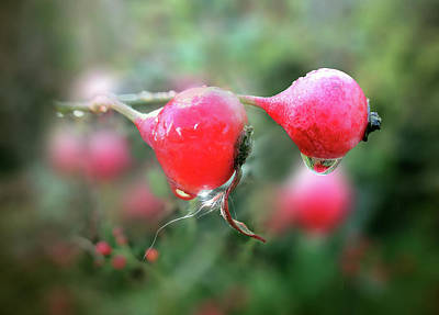 Photograph - Rosehip Syrup By V.kelly by Valerie Anne Kelly