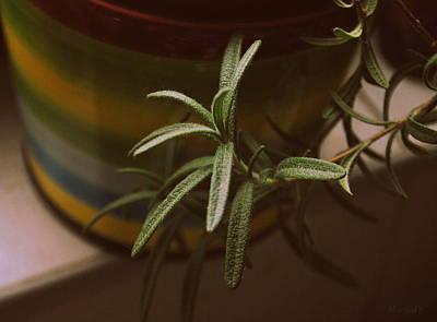 Photograph - Rosemary by Marija Djedovic