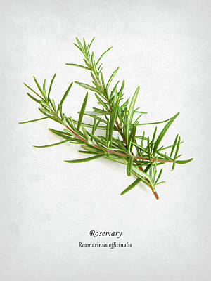 Ingredients Photograph - Rosemary by Mark Rogan