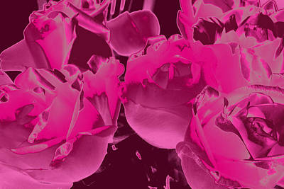 Photograph - Roses #5 by Anne Westlund