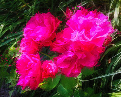 Photograph - Roses Aglow by Ronda Broatch