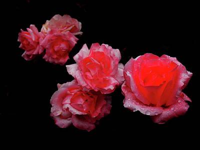 Roses And Rain Art Print