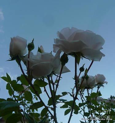 Folkartanna Photograph - Roses And The Sky by Anna Folkartanna Maciejewska-Dyba
