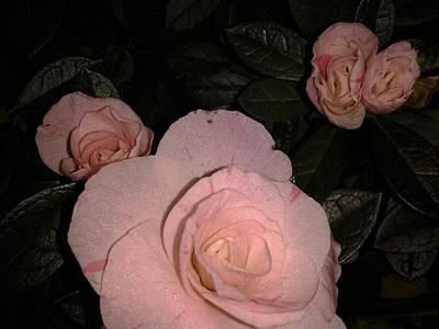 Annette Kinship Wall Art - Photograph - Roses Are by Annette Kinship