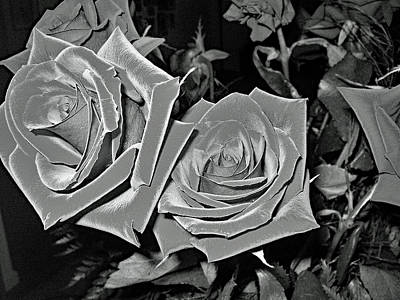 Photograph - Roses Are.... by John Schneider
