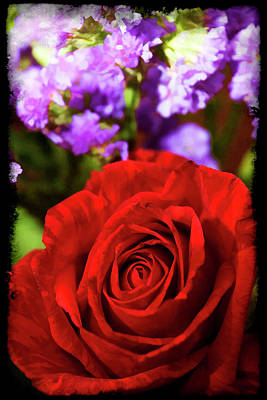 Photograph - Roses Are Red II by Ricky Barnard