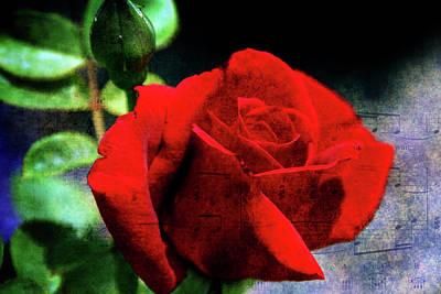 Roses Are Red My Love Art Print by Susanne Van Hulst