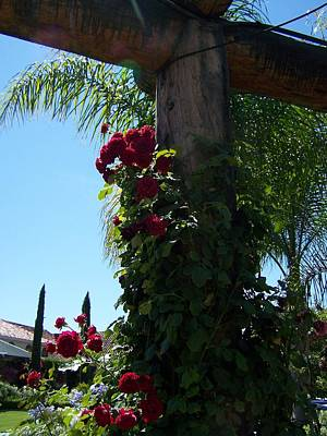 Photograph - Roses At The Vineyard by Pamela Walrath